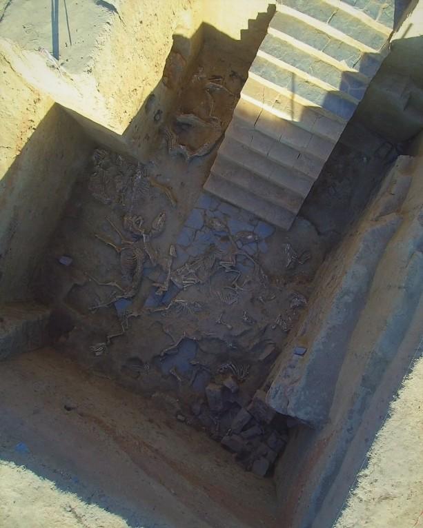 escalinata-y-restos-de-animales-en-el-yacimiento-del-turunuelo_a3d842c5.jpg
